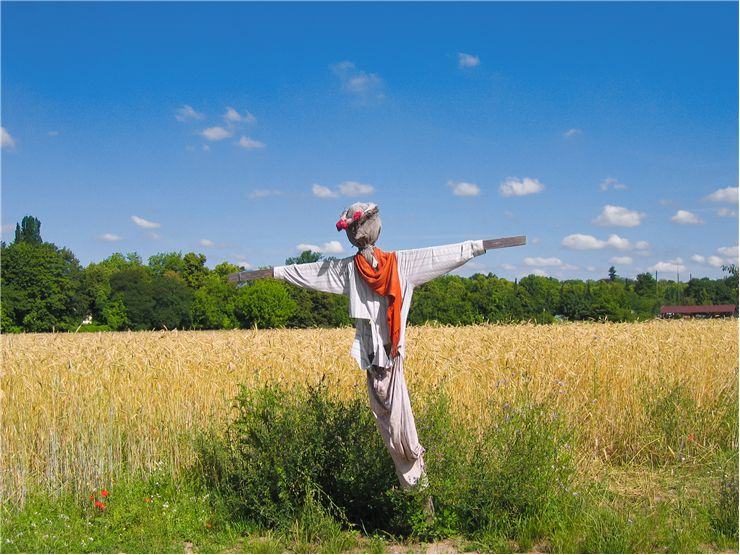 Picture - Wheat Field with Scarecrow